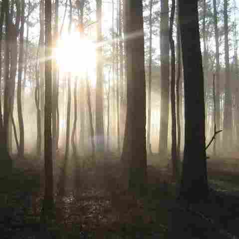 Fleeing To Dismal Swamp, Slaves And Outcasts Found Freedom