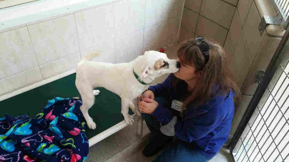 Salem Mass Dog Rescue
