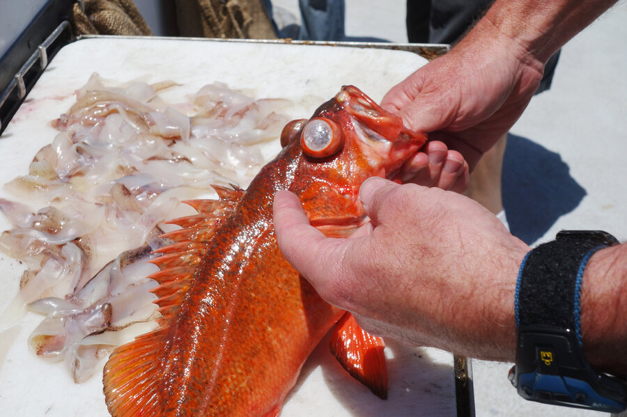 How Anglers Are Learning To Save Fish That Get U0027The Bendsu0027