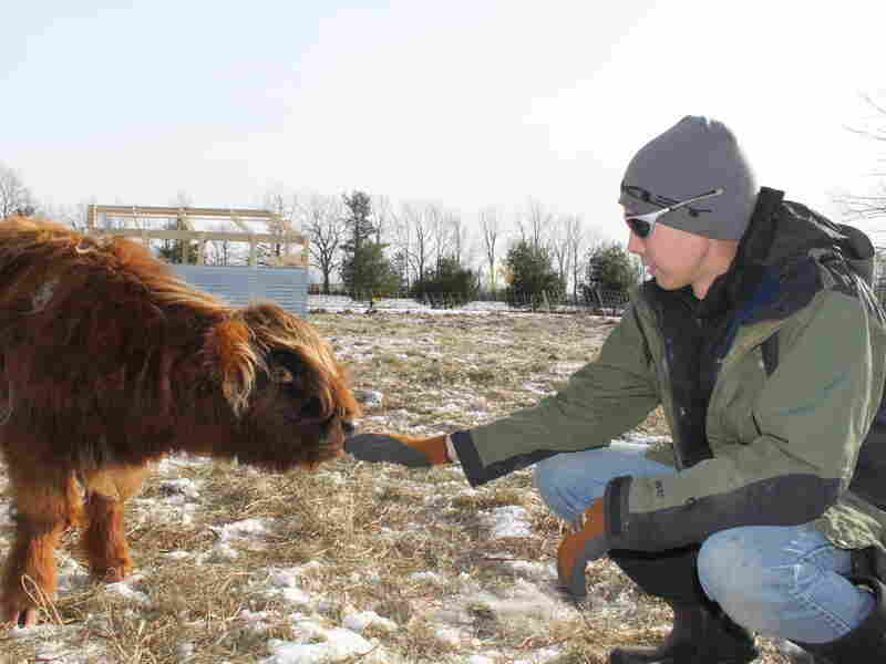 "Josh Gerritsen reaches out to one of the farm's Highland calves. He says life in the city wasn't as satisfying: ""You're not intimately tied to anything."""