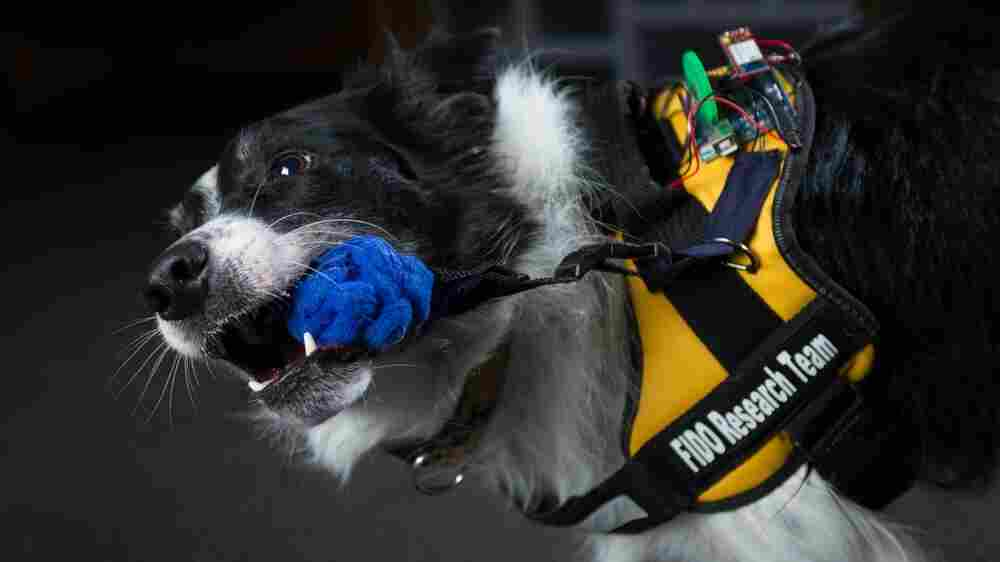 Sit. Stay. Call 911: FIDO Vest Gives Service Dogs An Upgrade