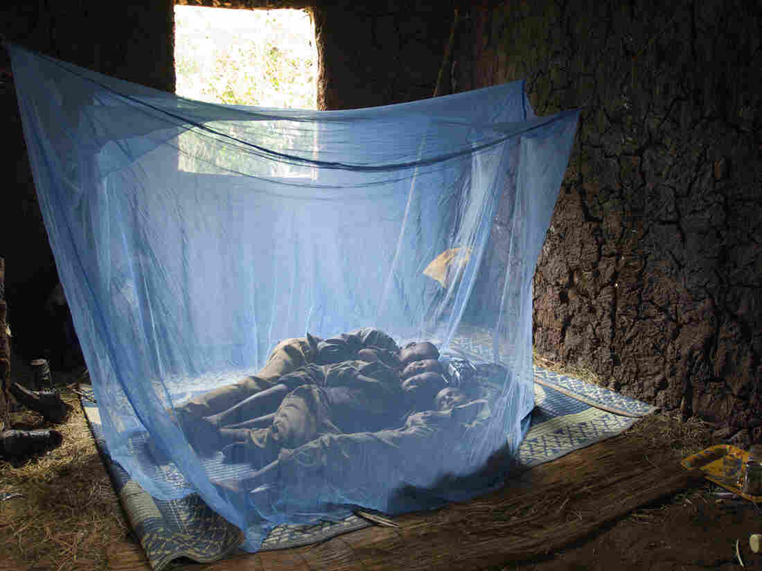The four children of Ethiopian farmer Mamo Tesfaye sleep under insecticide-treated bed nets to prevent bites from malaria-infected mosquitoes.