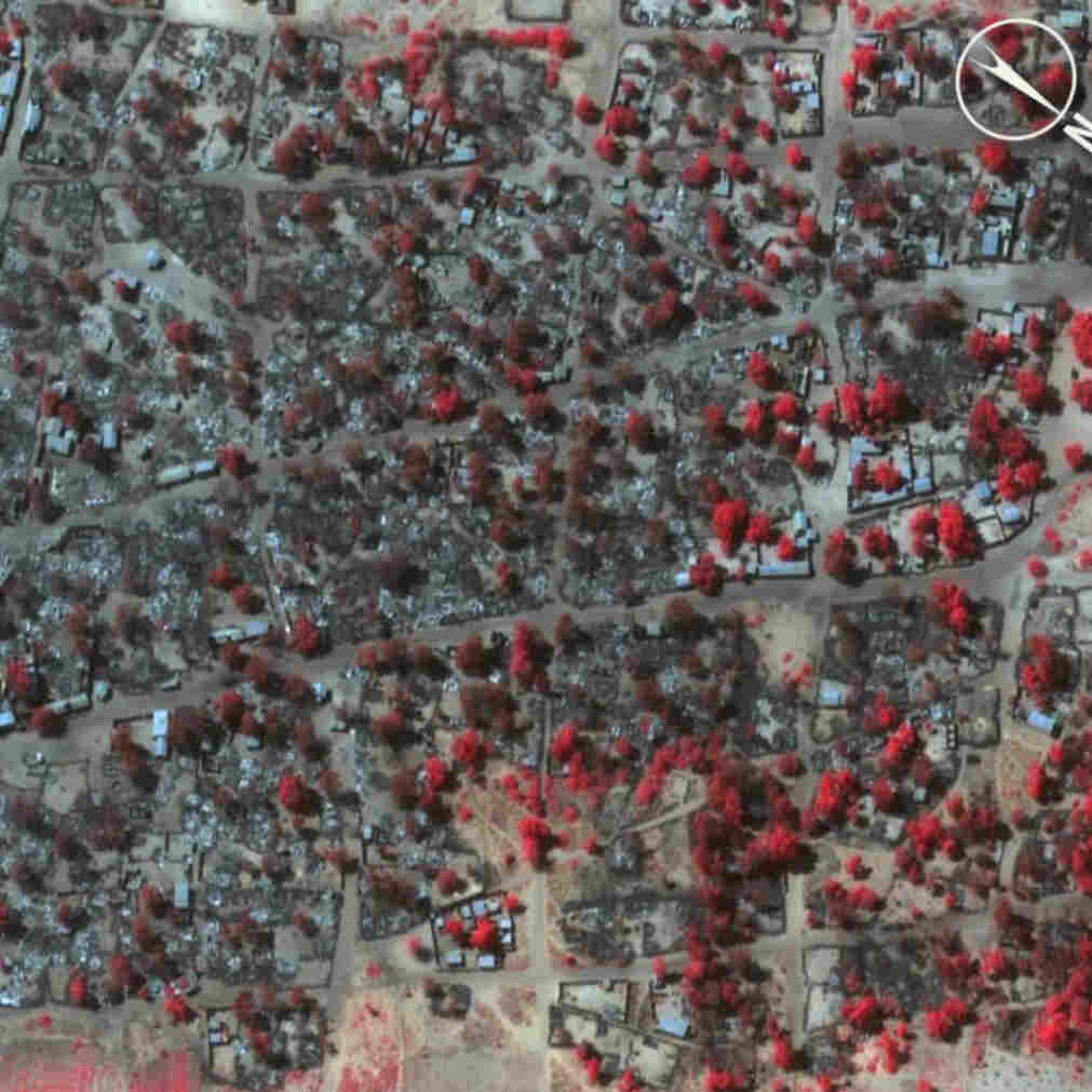 Satellite image of dense housing in Doro Baga taken on Jan. 7, following an attack by Boko Haram. This shows almost all the structures razed. The inset demonstrates the level of destruction of most of the structures in the town. The red areas indicate the remaining healthy vegetation.