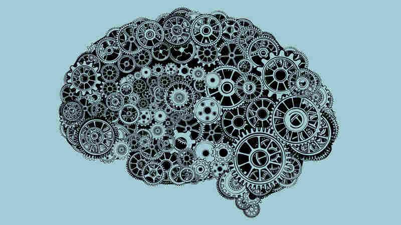 Brain.
