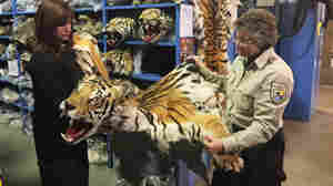 Tiger Skins And Rhino Horns: Can A Trade Deal Halt The Trafficking?