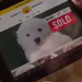Ad Fumble: GoDaddy Pulls Super Bowl Puppy Commercial Amid Outrage