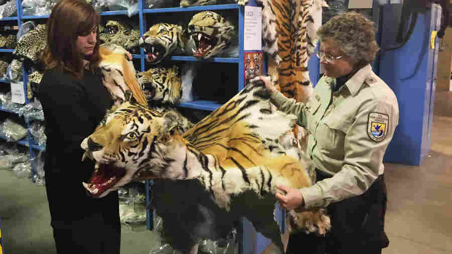 Coleen Schaefer (left) and Doni Sprague display a tiger pelt that was confiscated and is being stored at the National Eagle and Wildlife repository on the outskirts of Denver. Some 1.5 million items are being held at the facility. The Asia-Pacific Trade Pact, which is still under negotiation, would punish wildlife trafficking.