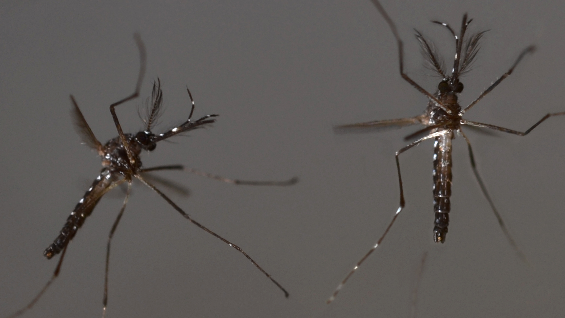 Florida Health Officials Hope To Test GMO Mosquitoes This Spring