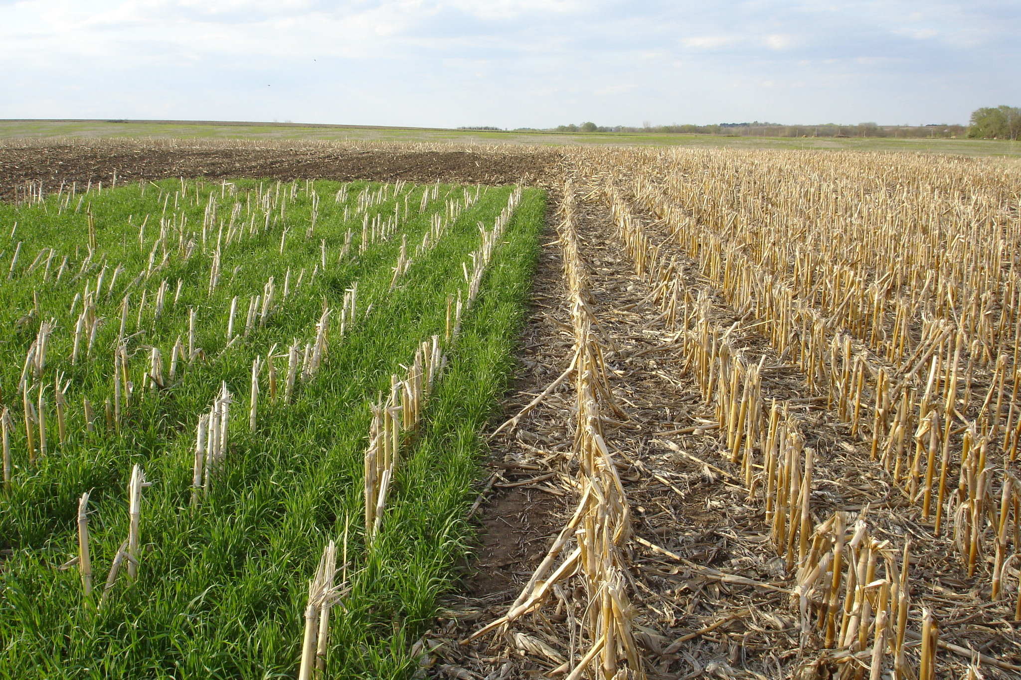 Here's How To End Iowa's Great Nitrate Fight