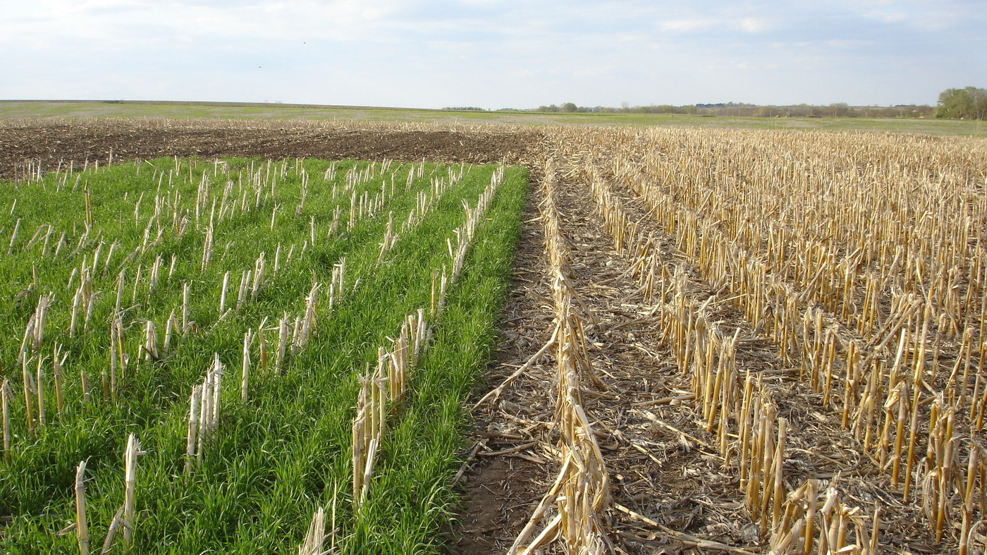 Here 39 s how to end iowa 39 s great nitrate fight the salt npr for Pollution fighting plants