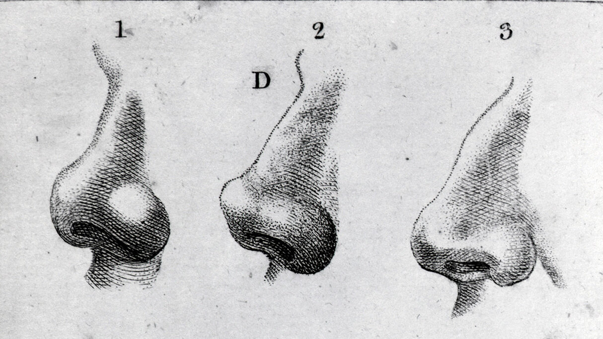 Engravings of noses from 1797.