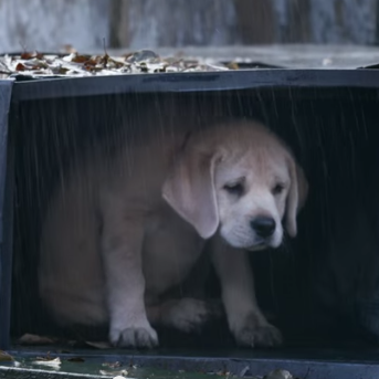Watch The Super Bowl Or We'll Kick This Dog: The Saddest Ads Ever