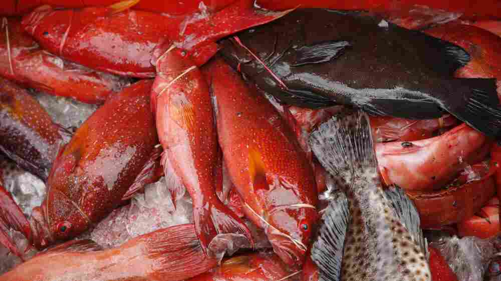 Gotcha: Satellites Help Strip Seafood Pirates Of Their Booty