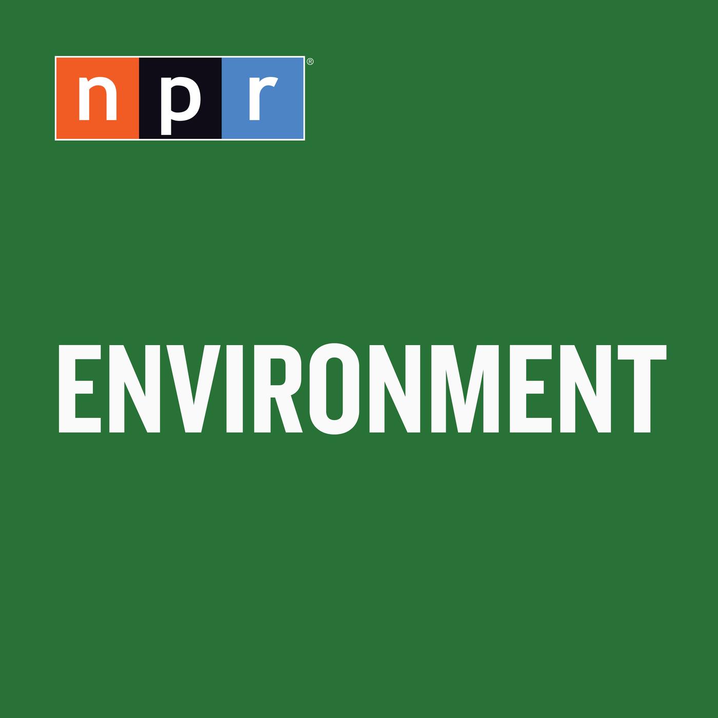 Environment : NPR:NPR