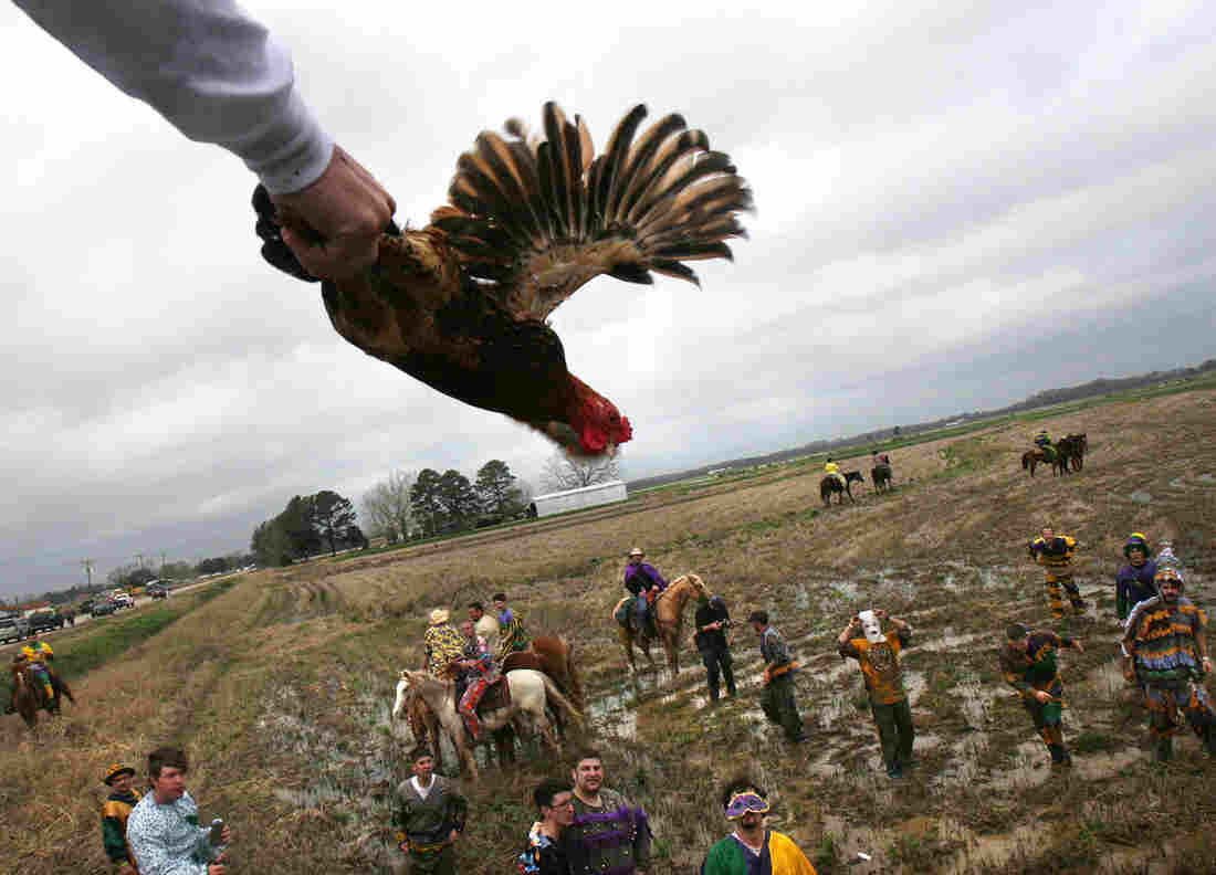 The annual Courir de Mardi Gras in Mamou, La., in February 2008. In the Cajun country tradition, revelers go house to house, collecting ingredients for gumbo from local families. Here, the host tosses a live chicken from a rooftop for the participants to catch — which can be tricky, considering the festivities often begin with early-morning drinking.