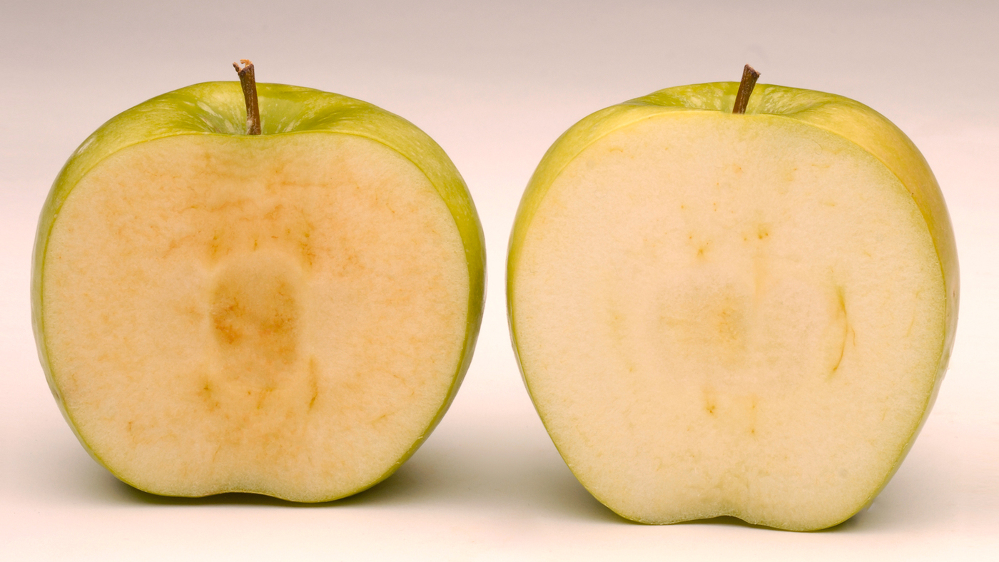 gmo apples get the nod but not much of a welcoming party the