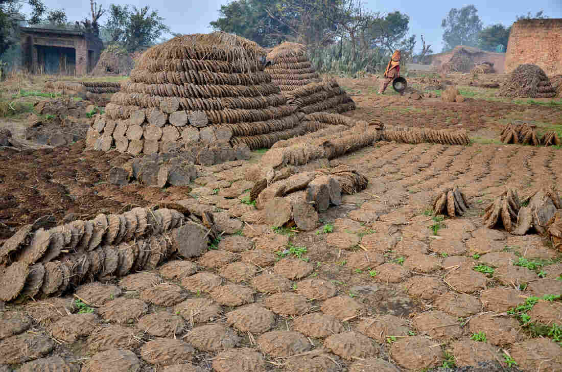 Millions of Indian women shape cow dung into pies, dry them in the sun and use them as cooking fuel. This scene is on the road leading to the village of Sadikpur in the northern Indian state of Utter Pradesh.