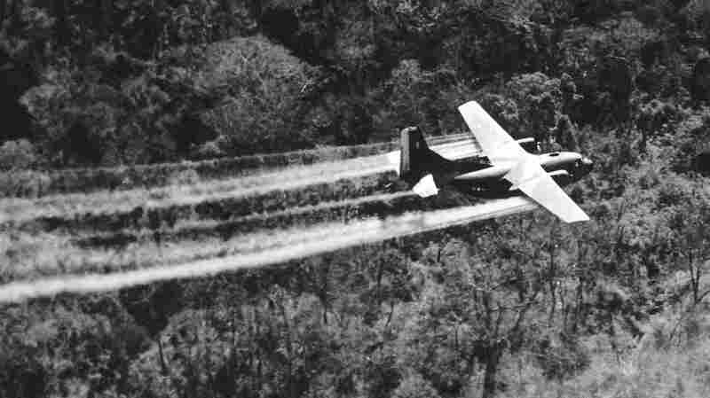 A U.S. Air Force C-123 sprays herbicides on dense jungle beside a South Vietnamese highway on May 18, 1966. This aircraft is the last in a formation of three. Spray from the other two planes can be seen ahead.