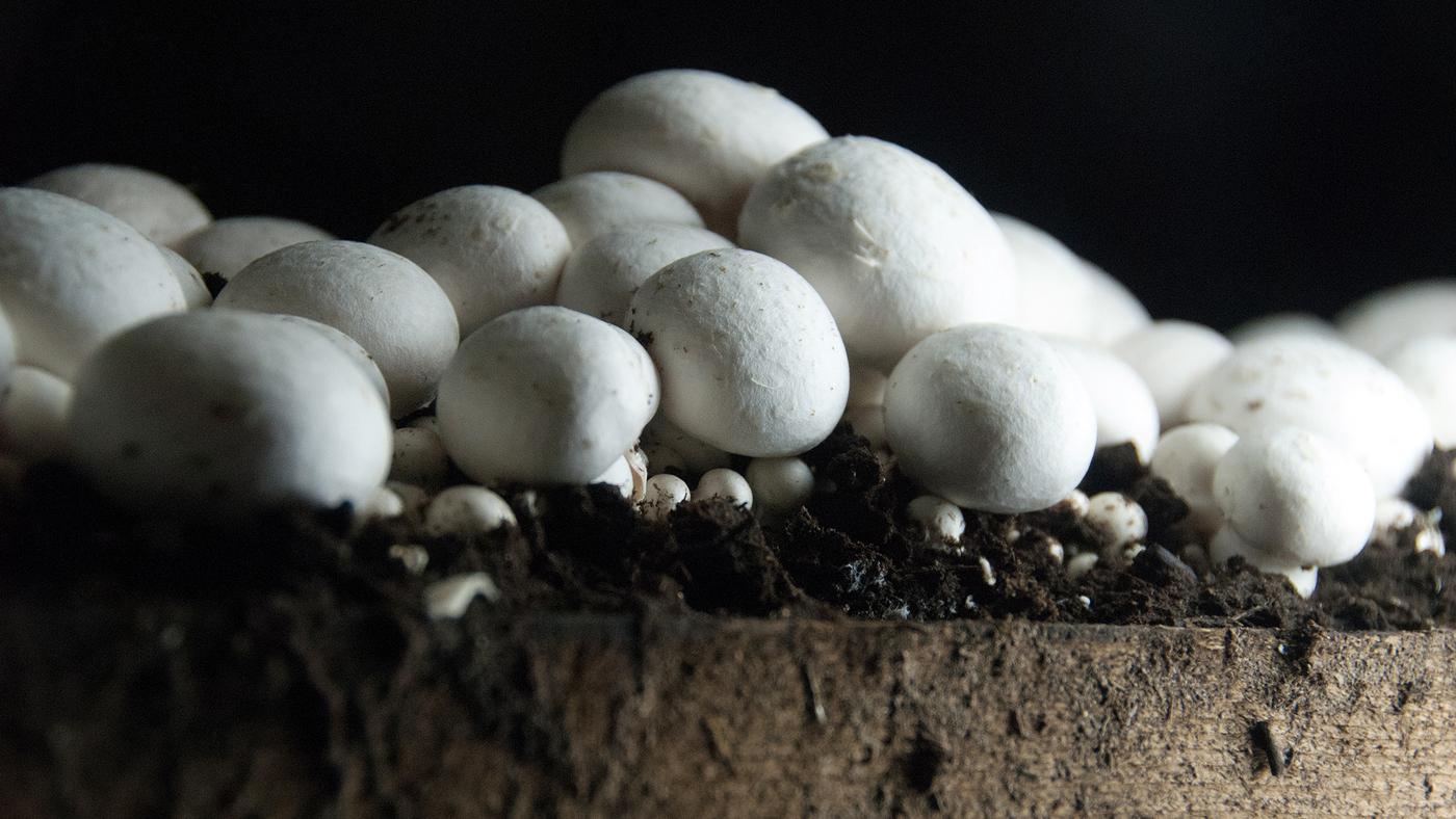 A Wet And Wild Look Inside The  U0026 39 Mushroom Houses U0026 39  Of A