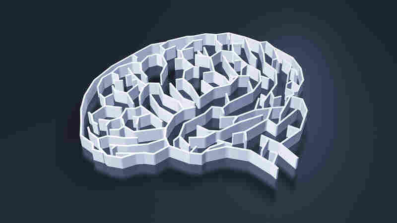 What do we know about the human brain and what do we still need to learn?