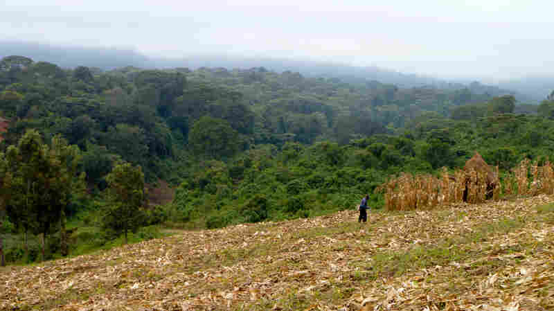 In Africa, land that borders forests is increasingly used for farming.
