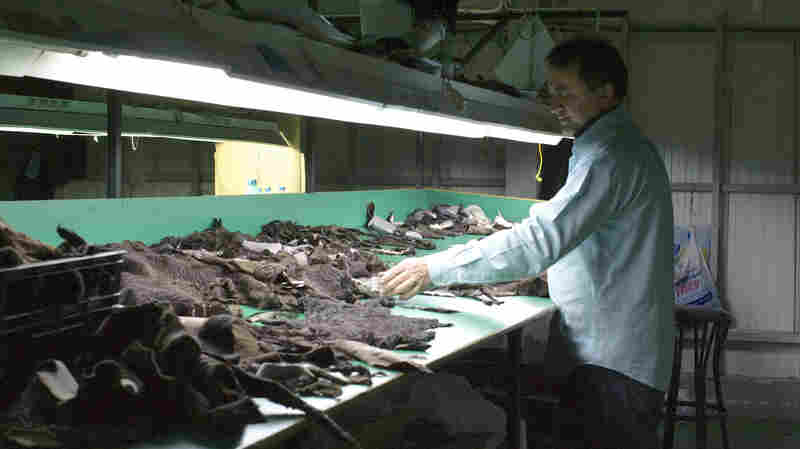 """A worker at Soulis Furs in Kastoria sorts through treated mink pelts. """"We buy the pelts — minks or foxes or other animals — from North America and Scandinavia and send them for treatment in factories or abroad,"""" says Makis Gioras of Soulis Furs in Kastoria."""
