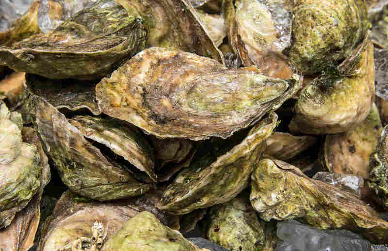 Eastern oysters in South Kingston, RI on July 25, 2013.