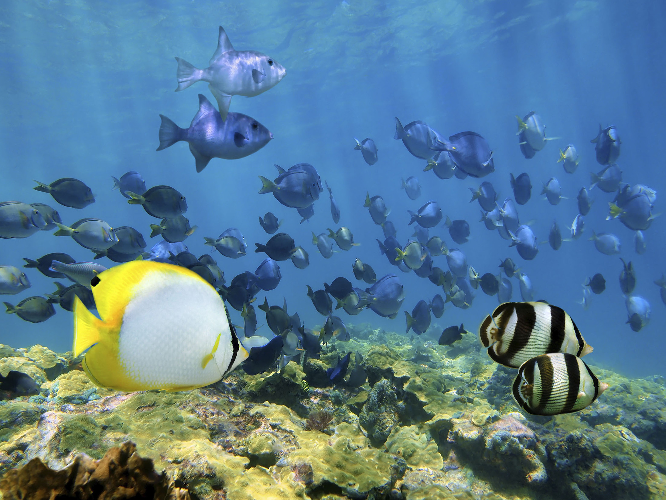 U.S. Biologists Keen To Explore, Help Protect Cuba's Wild Places
