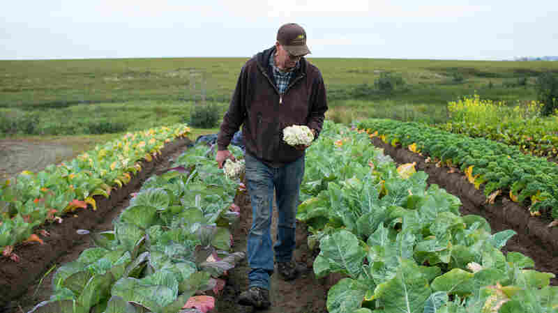 Tim Meyers on his four-acre vegetable farm in southwestern Alaska. Behind him: an endless sea of tundra, and a glimpse of the town of Bethel.