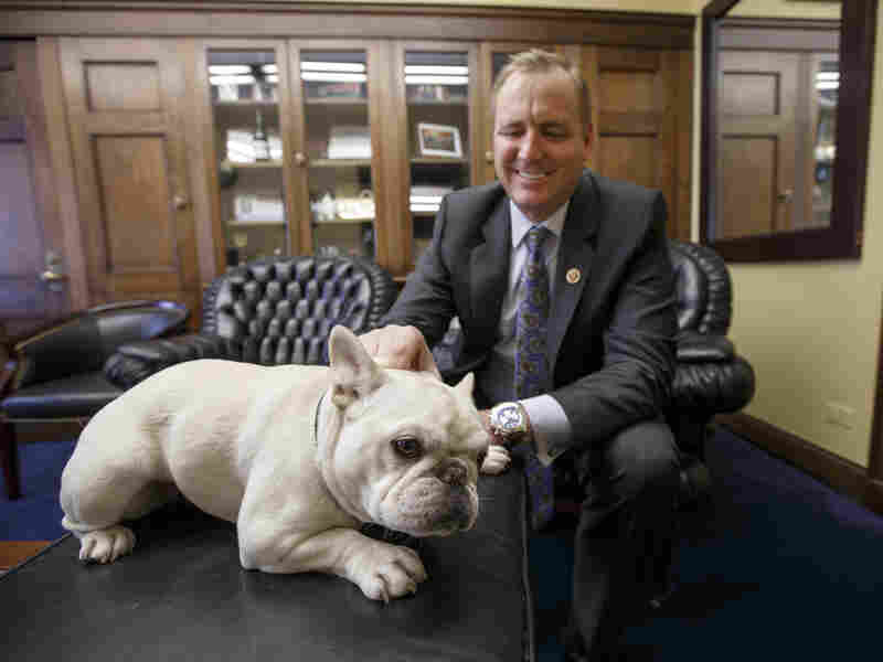 Rep. Jeff Denham, R-Calif., gives some attention to Lily, his 15-pound French bulldog, Feb. 15 in his office on Capitol Hill in Washington. Lily once was rejected by Amtrak, but the House passed a measure Wednesday that would let her ride with her owner.