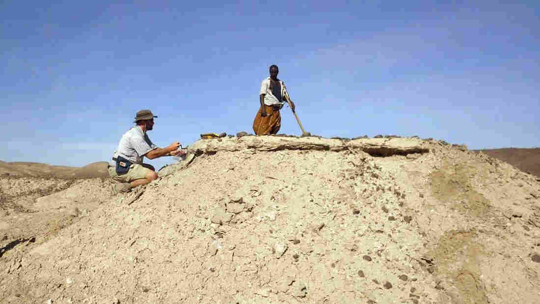With the help of researcher Sabudo Boraru (right), anthropologist Chris Campisano, of Arizona State University, takes samples from the fossil-filled Ledi-Geraru project area in Ethiopia. The jawbone was found nearby.