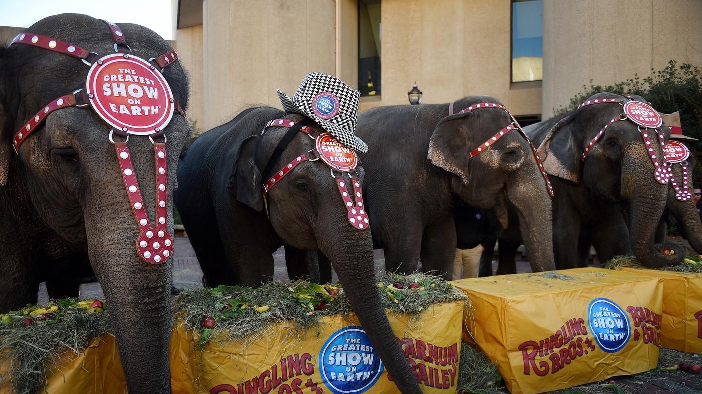 elephants npr