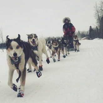 Image for Iditarod's Top Dogs Will Brave New Twists