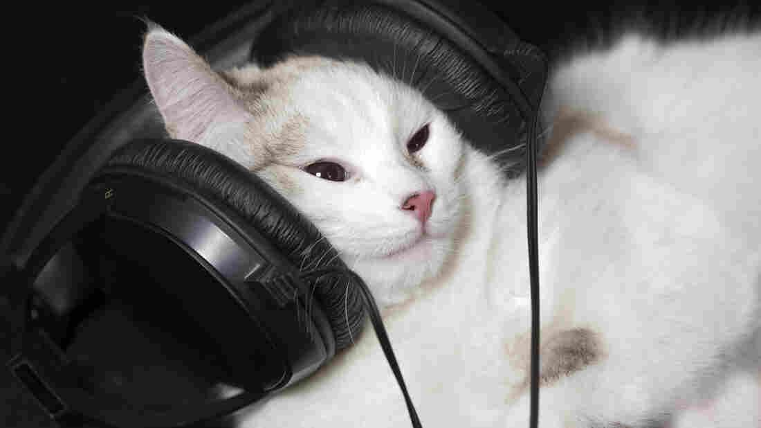 "Could this cat be enjoying ""Spook's Ditty""?"