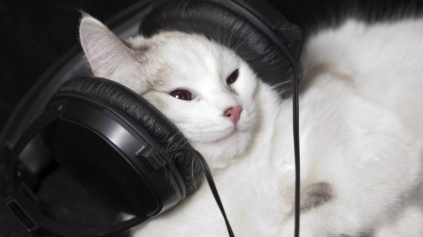 Music to Calm a Cat