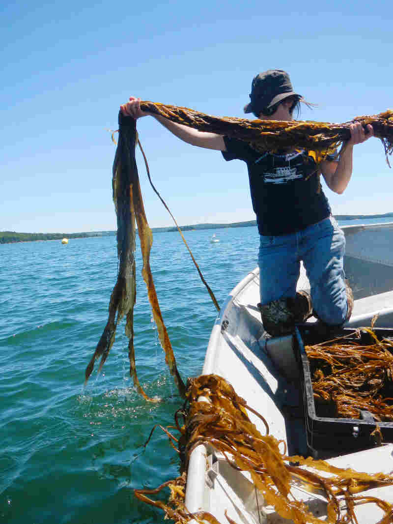 Seaweed expert Sarah Redmond works with farmers off the coast of Maine to expand their industry.