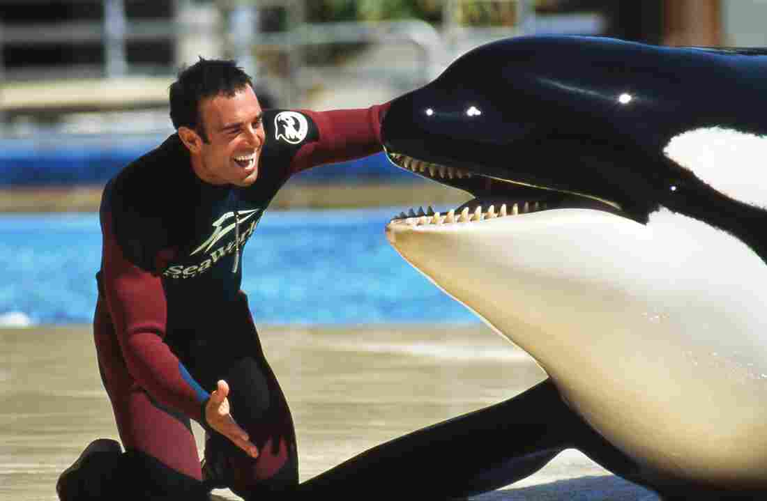 John Hargrove, a trainer who spent 14 years working with orcas, mostly at SeaWorld, eventually became disillusioned with the company's treatment of its killer whales.
