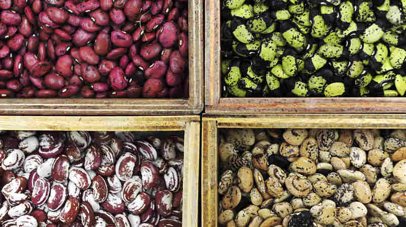 These beans, grown on test plots at the International Center for Tropical Agriculture in Colombia, can thrive in temperatures that cripple most conventional beans.