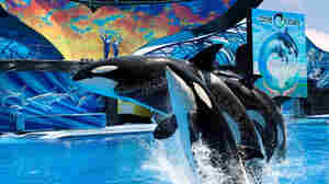 SeaWorld is fighting back against critics of the theme park's treatment of animals following a sharp decline in attendance.