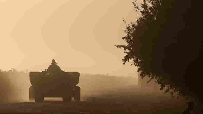 A worker kicks up dust as he drives a tractor at a farm on Aug. 22, 2014 near drought-stricken Firebaugh, Calif.