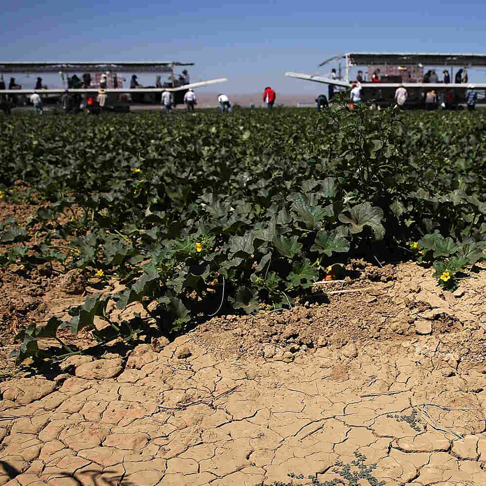 Scary Times For California Farmers As Snowpack Hits Record Lows
