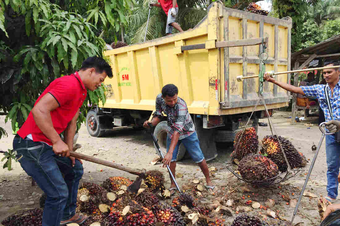 Workers load a truck with palm fruit for a trip to a mill, where the fruit will be processed into crude palm oil.