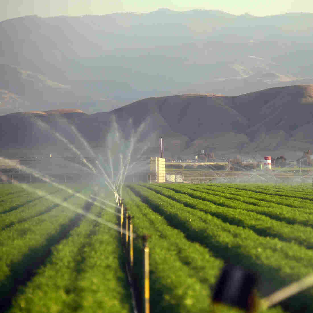 California Farmers Gulp Most Of State's Water, But Say They've Cut Back