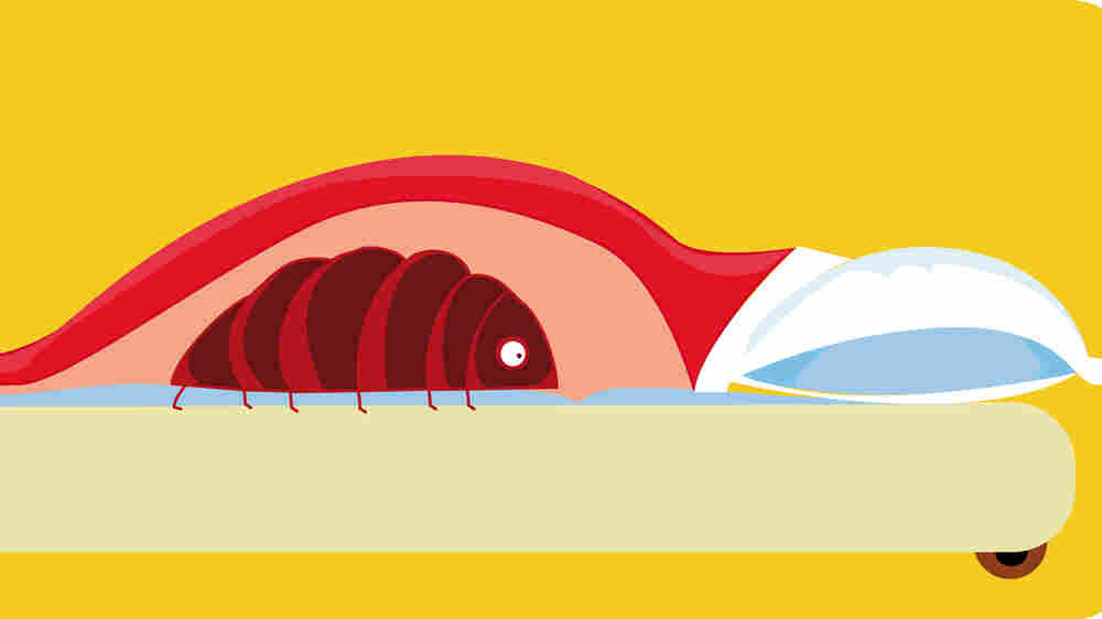 The Creepy, Crawly World Of Bedbugs And How They Have 'Infested' Homes