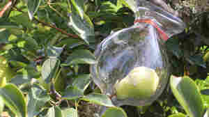 Clear Fruit Brandies Pack An Orchard Into A Bottle