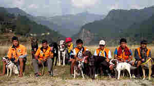Dog Team Races To Rescue Lost Hiker In The Himalayas