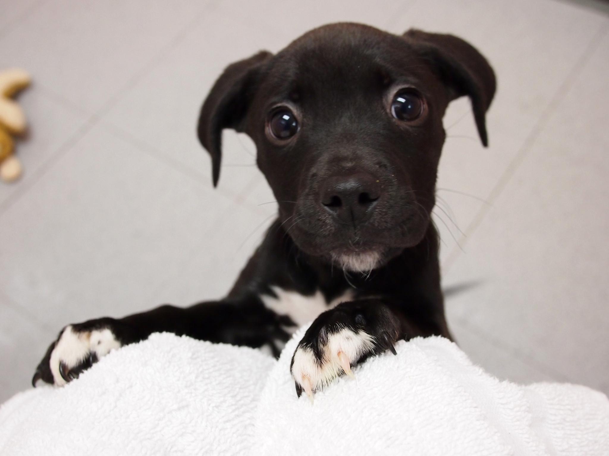 Scientists Probe Puppy Love