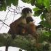 Ntokou-Pikounda National Park, DRC
