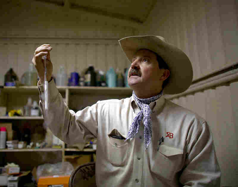 The R.A. Brown ranch sells straws of frozen bull semen, held here by owner Donnell Brown. His ranch is one of the top producers of Angus bulls in the nation.