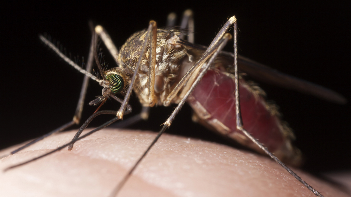 Why Do Mosquitoes Like To Bite You Best  It U0026 39 S In Your Genes   Shots